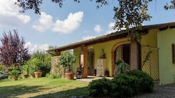 Detached House in the Hills of Arezzo, Surrounded by Olive Trees