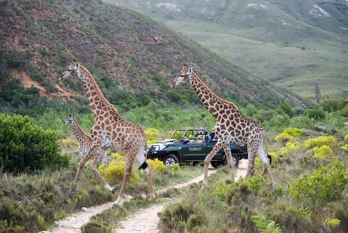 . Gondwana Game Reserve