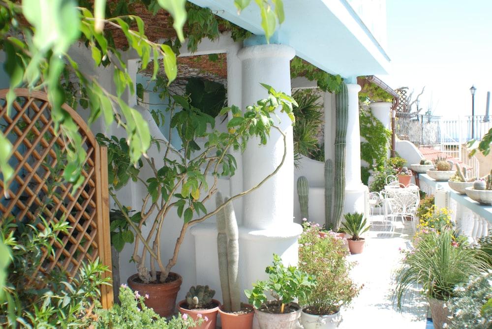 호텔 라 팔마(Hotel La Palma) Hotel Image 26 - Property Grounds