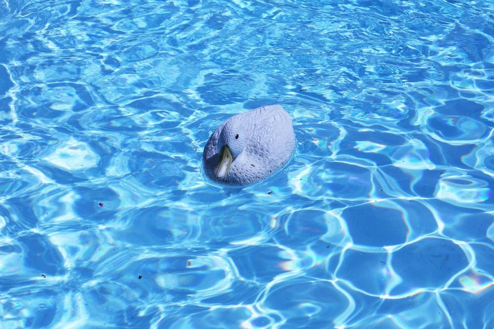 파라디소 게스트 하우스(Paradiso Guest House) Hotel Image 38 - Outdoor Pool