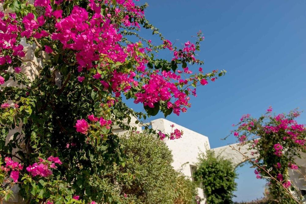 스타고네스 럭셔리 빌라(Stagones Luxury Villas) Hotel Image 67 - Garden