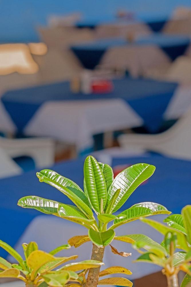 쿠바 아곤다(Cuba Agonda) Hotel Image 30 - Outdoor Dining