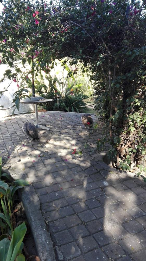 빌라 비아-미드랜드(Villa Via - Midrand) Hotel Image 74 - Garden
