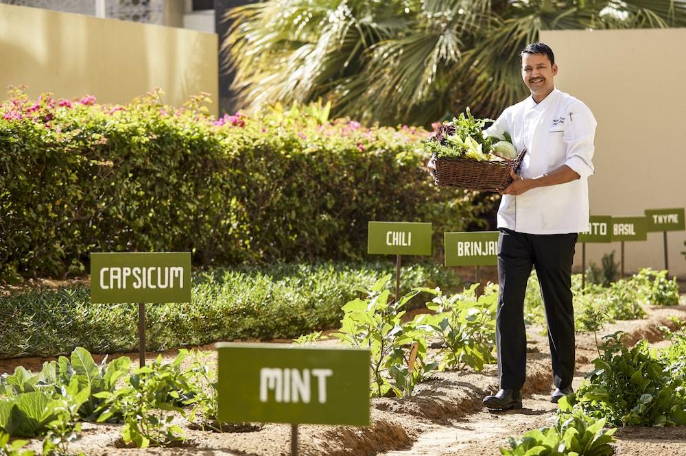 스위소텔 알 구르아이르 두바이(Swissotel Al Ghurair Dubai) Hotel Image 36 - Garden