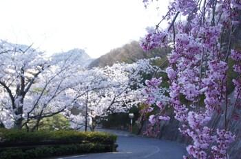GINSUISO BEKKAN CHORAKU View from Property