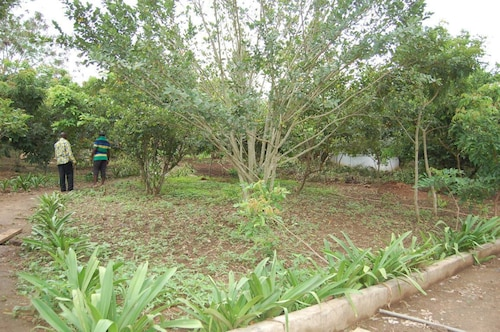 Konkon Wonderland, Awutu Efutu Senya